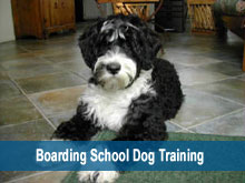 Boarding School Dog Training